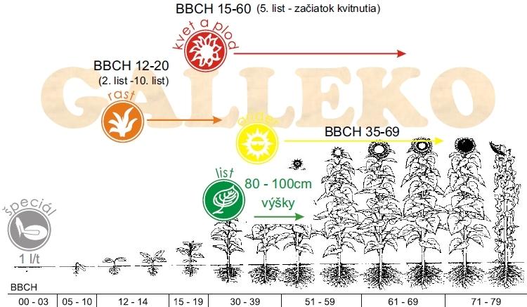 Slnečnica a kukurica - metodika