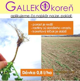 Galleko koreň - repka