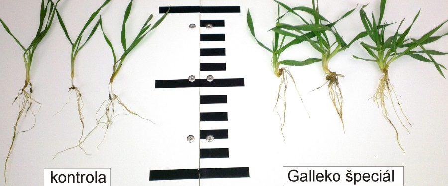 Prípravky Galleko pomáhajú oziminám...
